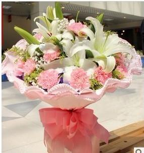 粉色康乃馨美丽年轻